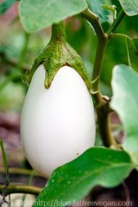 white-eggplant